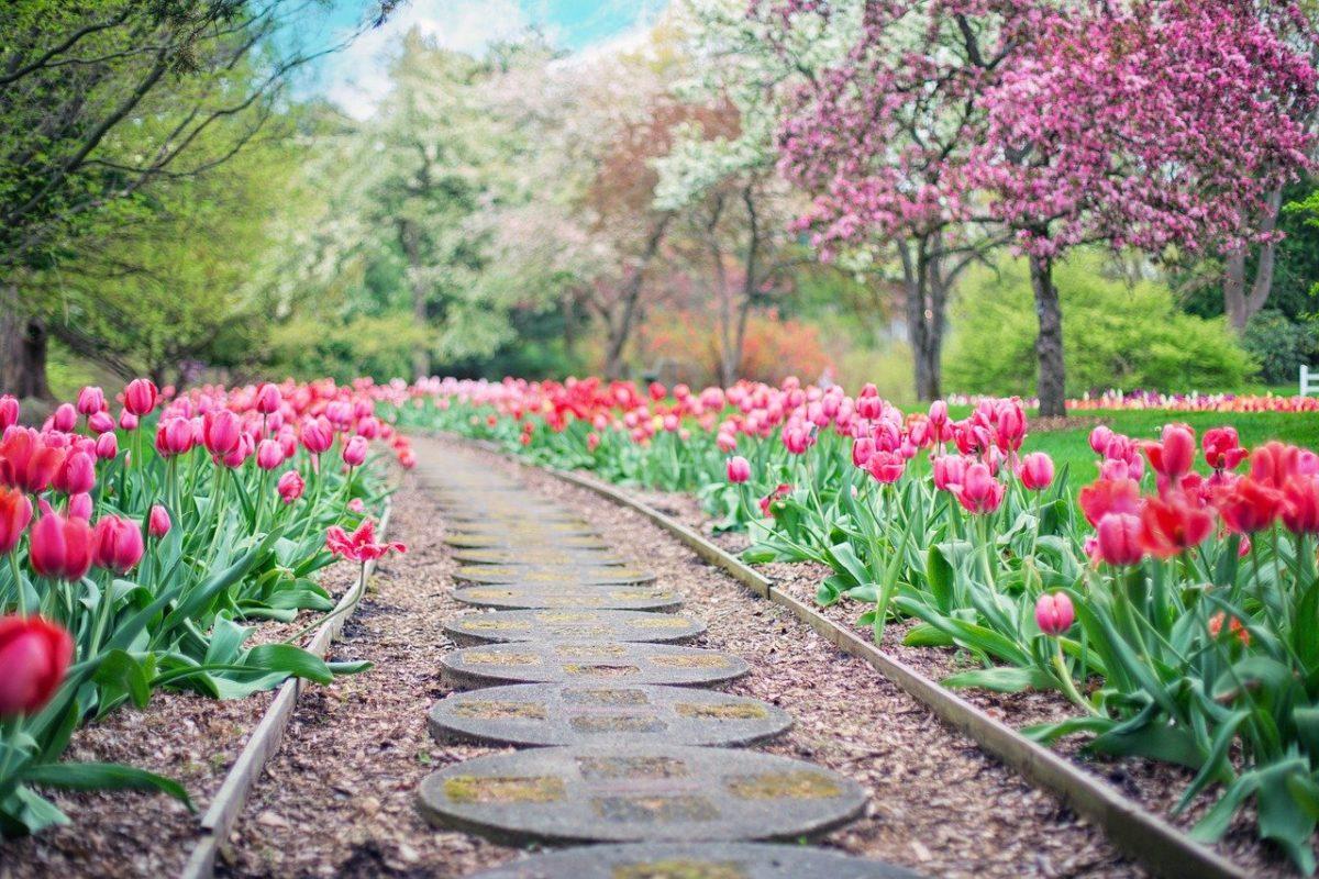Śliczny ,a także ładny ogród to zasługa wielu godzin spędzonych  w jego zaciszu w trakcie jego pielegnacji.